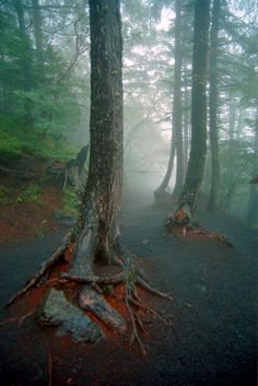 Below the Treeline, in the Fog, at Mt Fuji, Japan, by James Walton, on flickr.