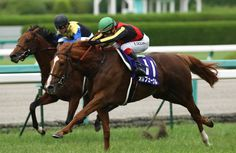 """The Japanese Triple Crown Horse"" Orfevre ""TAKARADUKA KINEN 2012"" revive!!!"