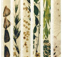 fred camper's collage of stan brakhage filmstrips from the film mothlight (1963)
