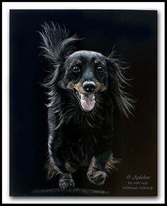 Scratchboard Art, Arte Dachshund, View Image, Dachshunds, Doggies, Photo Art, Artwork, Animals, Black