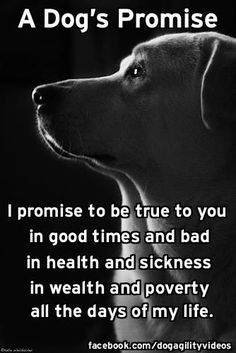 A Dog's Promise… Brought to you in part by StoneArtUSA.com ~ pet memorials since 2001