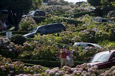 "Para wisatawan mengambil foto di Lombard Street, sebuah lokasi turis yang populer yang juga dikenal sebagai ""jalan paling berliku"" di San Francisco, California, 26 Agustus 2015."