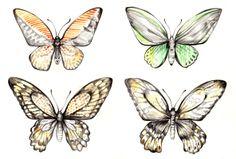 yumie ogawa [ Butterfly ]