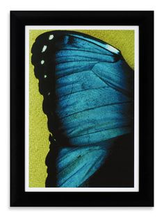 """""""Butterfly II Framed Print"""" offers a personal greeting..."""