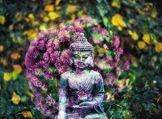Free Image on Pixabay - Buddha, Flower, Buddhism, Religion Buddha Flower, Spiritual Photos, What Is Spirituality, Les Chakras, Meditation, Libido, Gautama Buddha, Buddha Buddha, Luang Prabang