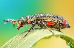 Macro photos of insects covered in dew drops. Click for more images