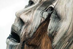 Christopher David White ist Bildhauer, aber im Herzen auch ein wenig Zauberer. Warum? Seine scheinbaren Holzskulpturen sehen täuschend echt, sind aber eigentlich aus Ton. In mühevoller Kleinarbeit bringt White die Holzmaserung von Hand in das weiche Materi