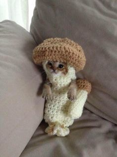 """Wasabi-chan"" doesn't look like she's enjoying her crocheted mushroom costume, but it's for her own good. Wasabi-chan was rescued after being attacked and injured by a crow. Her rescuer was feeding her with a tube, which the kitten hated, so the mushroom suit was made to hold her down while feeding. Awww!"