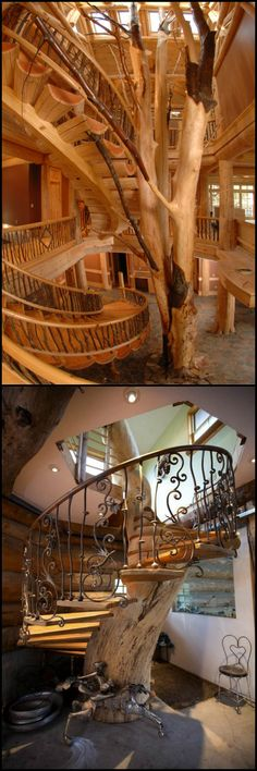 It's surprising to us how many sets of 'whole tree' stairs we're finding!  You can view them all in our 'Whole Tree Architecture' gallery http://theownerbuildernetwork.co/34mz  Do they pass the safety muster? What about the aesthetics?