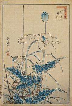 Bird and Poppies ( circa 1850 -1870) by Sugakudo. Woodblock print on paper.