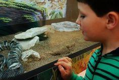 Reptiles Rock St Louis, Missouri  #Kids #Events