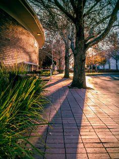 University of the Free State,  #UFStoday - Bloemfontein Campus. (Photo Credit: Phathisizwe Mathebula)