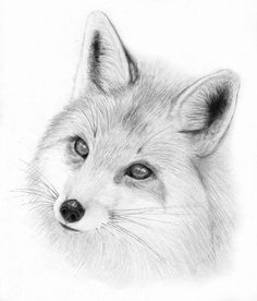 Fox by spacepecker cute animal drawings, animal sketches, fox drawing, Fox Drawing, Drawing Sketches, Pencil Drawings, Art Drawings, Cute Animal Drawings, Animal Sketches, Fuchs Tattoo, Art Sculpture, Fox Tattoo