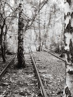 FREE SHIPPING, black and white photography, train tracks, black and white prints, railroad photography, train photography, railroads, railway track, railway tracks, railroad, James Clancy