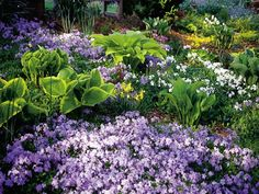 Merrifield Garden Center - Shade Gardens