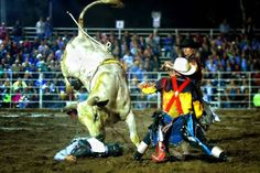 Bull rider is laid out