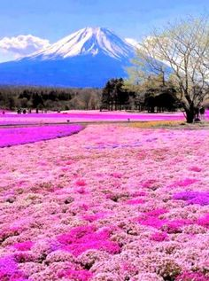 Mount Fuji, Japan. Think in pink. Pisces