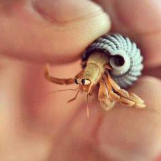 A tiny hermit crab
