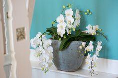 Liberto #Konzept #Florist #Phalaenopsis