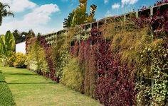 Graças ao paredão de 27 x 2 m, ninguém nota a vizinhança. Só o que se veem são lambaris-roxos, russélias e clorofitos, criando um jogo de texturas e cor. O sistema de irrigação automatizada facilita a manutenção. Projeto do paisagista Gilberto Elkis