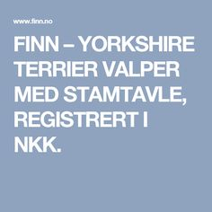 FINN – YORKSHIRE  TERRIER  VALPER  MED STAMTAVLE, REGISTRERT I NKK.