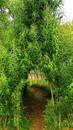 Živé stavby z vrby - vrbové stavby - Proutěné ploty a rohože na plot   Vrbové stavby - Naše realizace Living Willow, Farming, Country Roads, Gardening, Lawn And Garden, Horticulture