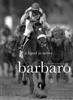 He had the heart of A Triple Crown Winner. R.I.P. Barbaro...you were an amazing horse - we were at the track when you won the Derby!.