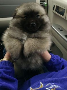This is a fuzz bucket. | 19 Dogs Who Are Actual Fuzz Buckets - I now have a new term for fluffy.....fuzz bucket!