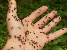 Pulverize Esta Simples Mistura E Você Nunca Mais Vai Ver Formigas Em Sua Casa! - Leia e Descubra!