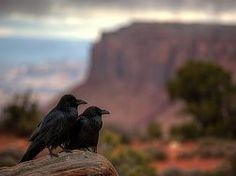 Dos cuervos en el cañón,