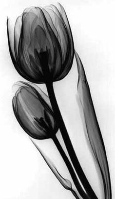 I am in love with this type of work, perfect tulip tattoo