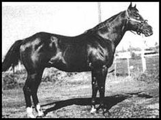 This horse figured in the lineage of many great horses I knew or owned.
