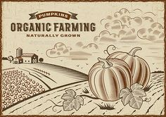 Pumpkin Organic Farming Landscape by iatsun Vintage organic farming label on pumpkin harvest landscape. Editable EPS10 vector illustration in woodcut style with clipping mask