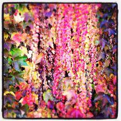 Colores de otoño!!! I Love it!!!!