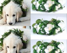 BellasBloomStudio Dog Wedding Outfits, Dog Wedding Attire, Tuxedo Wedding, Garland Wedding, Wedding Decorations, Wedding Backdrops, Wedding Ideas, Diy Wedding, Dog Tuxedo