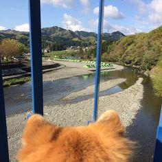 おはようございまーす♪☀️ Good morning!👍 日曜日、ゆっくり起きた朝のおさんぽたいむing🐾 昨夜遅くまで降っていた雨も上がって、朝から気持ち良く晴れ渡っていますよ✌️✌️ 秋川橋河川公園バーベキューランドも今日は賑わうのかな? みなさん、楽しい休日をお過ごしくださいね! Have a nice day!💕🤗 日本の反対側のみなさんは、 Have a nice dream.💕🤗 #愛犬#ちばわん#保護犬#dog#mixdog#inu#犬#イヌ#いぬ#ペット#pet#ふわふわ#後頭部#後ろ姿#風景#空#sora#sky#イマソラ#お散歩#おさんぽ#散歩#武蔵五日市#Photo#あきる野市#写真