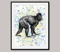 MR. APE print poster designed for 10 x 8 inch mixed by interiorart, $15.00