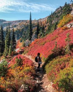 Stunning Fall Hikes in Washington - Wandering Backpack Places Around The World, Oh The Places You'll Go, Places To Travel, Places To Visit, Western Washington, Washington State, Washington Hiking, Get Outdoors, The Great Outdoors