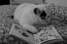 Community Post: 19 Cats Reading Books