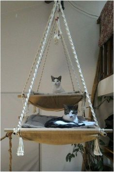 Animal Projects, Diy Projects, Macrame Projects, Cat Hammock, Cat Playground, Playground Design, Cat Enclosure, Cat Room, Pet Furniture
