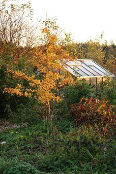 Ruusunmekko garden's greenhouse 'Verstas' in October 2014