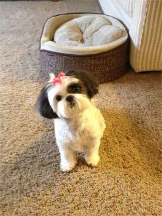 My dog Maddie. Jessie, Newark, DE - 8/9/2015