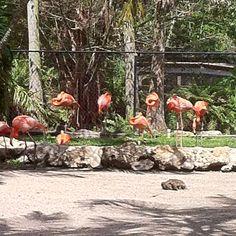 Flamingo Gardens Ft Lauderdale Places Ive Been, Places To Go, Flamingo Garden, Cruise Port, Florida Travel, Royal Caribbean, Fort Lauderdale, Pilgrimage, Key West