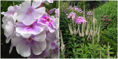 HAVEN I HUNE - AUGUST - The garden at Hune / August