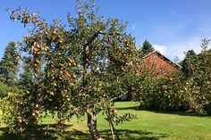 Want a cider apple orchard? Here's what to plant | MNN - Mother Nature Network