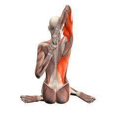 ૐ YOGA ૐ Gomukhasana Izquierdo ૐ Postura Cara de Vaca, pierna izquierda y brazo derecho encima de... Cow face pose, left leg and right arm up - Gomukhasana left - Yoga Poses | YOGA.com