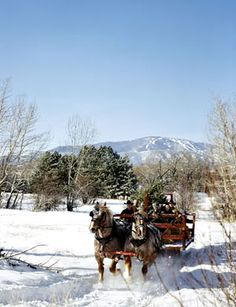 sledge horse christmas horse-drawn sleigh