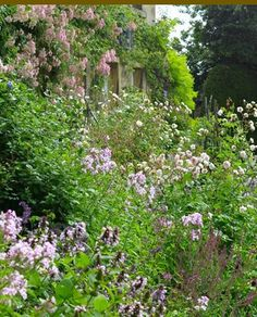 Against the house we have magnificent scented roses and a deep herbaceous border. (Arne Maynard)
