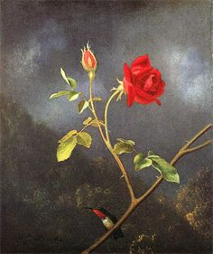 Martin Johnson Heade [1819-1904]