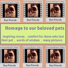 Best Friends: Homage to our beloved pets (thank-you gift book Book 3) Kindle Edition, now ALSO available as APP ! Link  https://www.amazon.com/Best-Friends-Homage-beloved-Silva/dp/B01KBZ0NCI/ref=sr_1_16?s=mobile-apps&ie=UTF8&qid=1471888506&sr=1-16